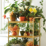 Unique Indoor Plant Container Ideas