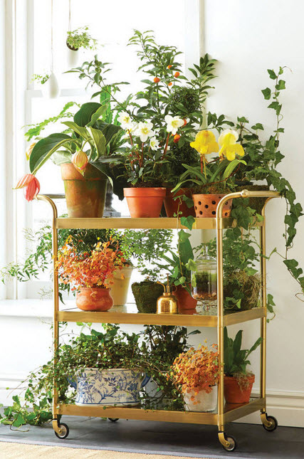Indoor plant container ideas bar cart container