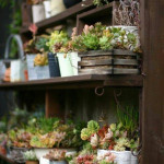 Unique Indoor Plant Container Ideas_9