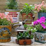 Unique Indoor Plant Container Ideas Metal Bucket_1